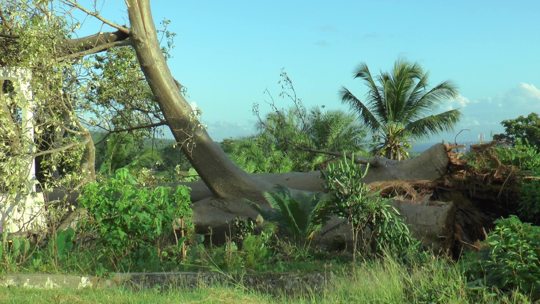 «Le baobab tombe par beau temps et pas par le vent»